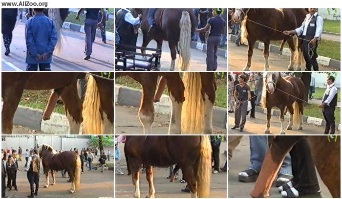 645a3b978363234 - Vhsgiant1hi-Res-2 - Animal Porn 1080p/720p
