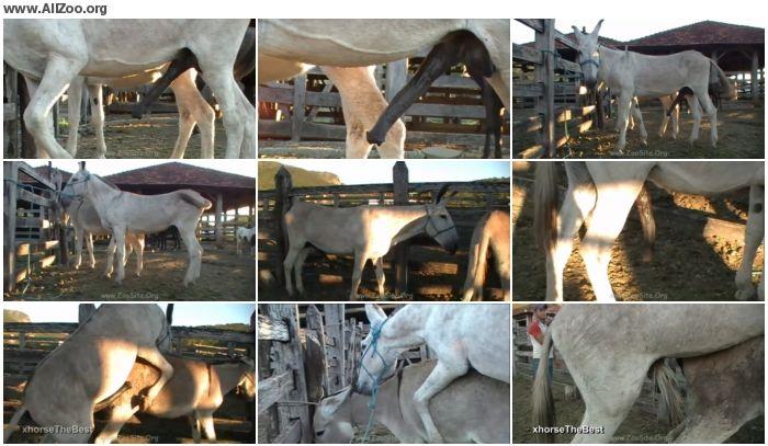 6fd7ee886157574 - Donkey Jack - Animal Porn 1080p/720p