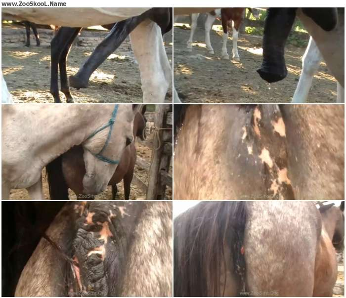 6e379e1326411788 - Lupe Vs Donkey Scene 05 - Sex Bestiality 720p/1080p