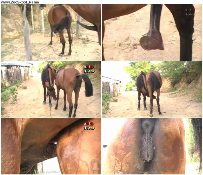 ad56081326411713 - Huge Stallion Vs Hot Mare Sc 03 - Sex Bestiality 720p/1080p