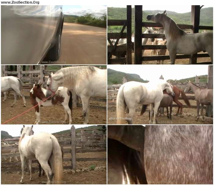 8e63541324921531 - Mare Lupe Vs Big Stallion Scene 01 - Bestiality Video 720p/1080p