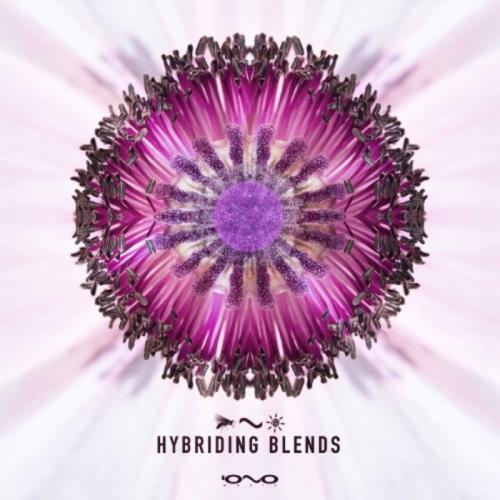 Hybriding Blends (2021)