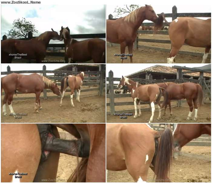 0543591326411717 - Stallion Breeding Scene 07 - Sex Bestiality 720p/1080p