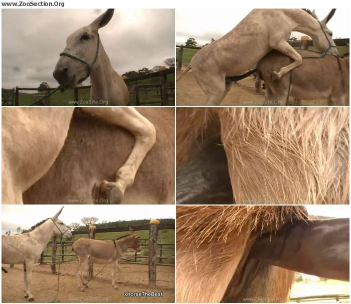 5f44a61324921511 - Donkey Ass - Bestiality Video 720p/1080p
