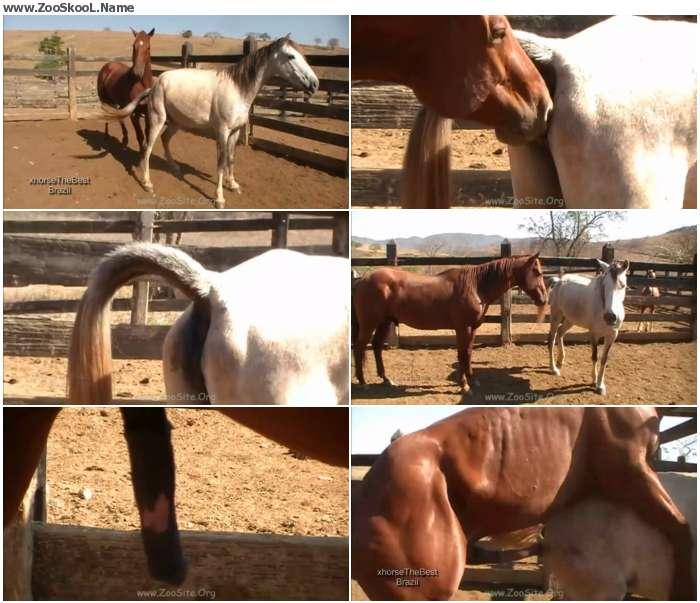 1f1c5e1326411847 - Stallion Vs Mare Sc 2 - Sex Bestiality 720p/1080p
