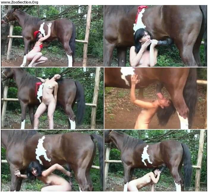 022e4d1326408109 - Stallion sex Action - Horse Porn