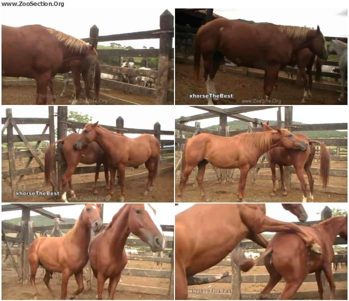 9027271324921365 - New Mare 4 - Bestiality Video 720p/1080p