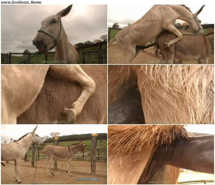 b60b0f1326411719 - Donkey Massive Hot 02 - Sex Bestiality 720p/1080p