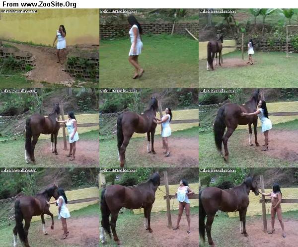 b87d291333126759 - Horse 325 - ZooSex Tube