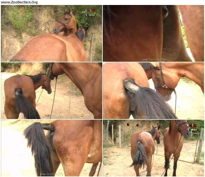 687e171324921439 - Huge Stallion Vs Hot Mare Sc 02 - Bestiality Video 720p/1080p
