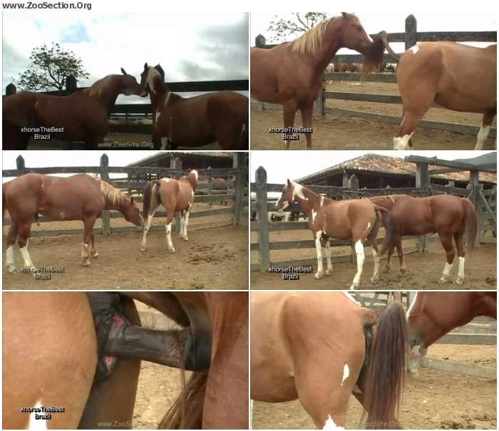 f2463e1324921489 - Stallion Breeding Scene 07 - Bestiality Video 720p/1080p