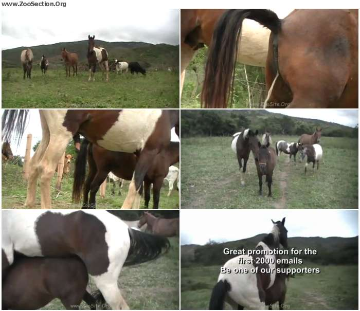 d1bb641324921585 - The Best Of Stallion Hot - Bestiality Video 720p/1080p