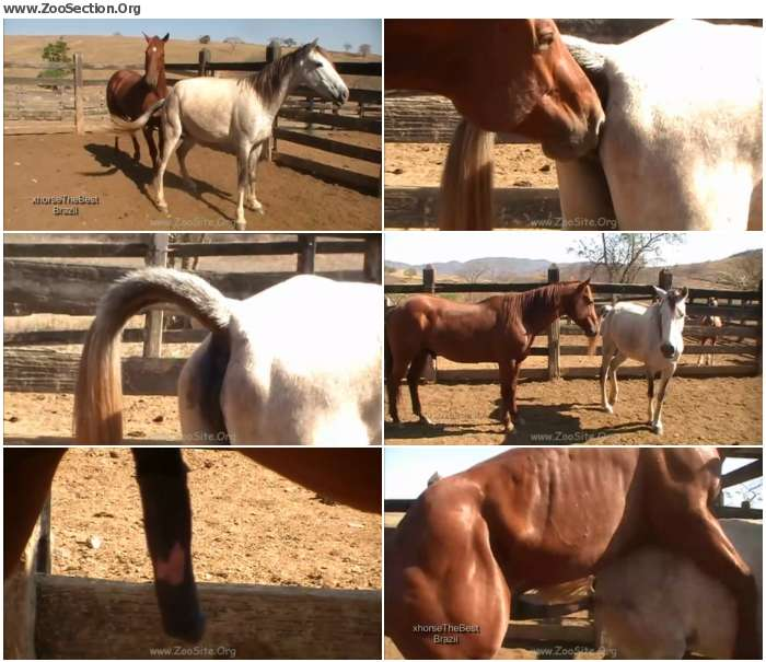 455eaa1324921611 - Stallion Vs Mare Sc 2 - Bestiality Video 720p/1080p