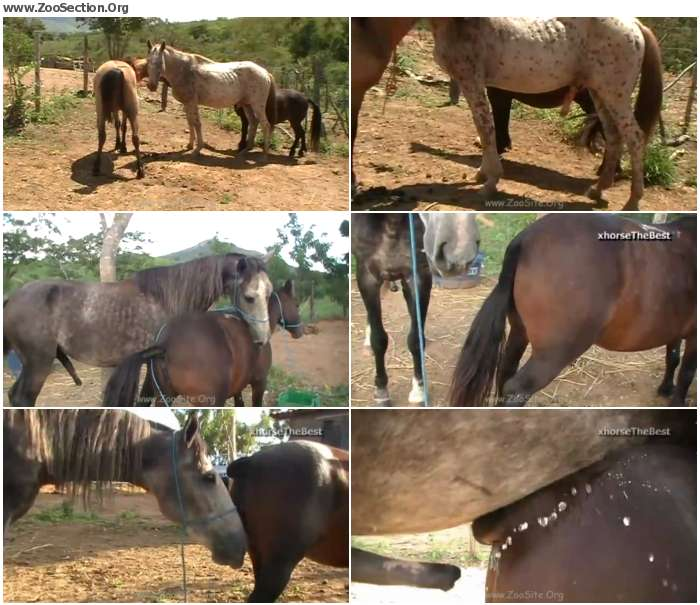 7c063f1324921432 - Small Mares  Pink And Madona - Bestiality Video 720p/1080p